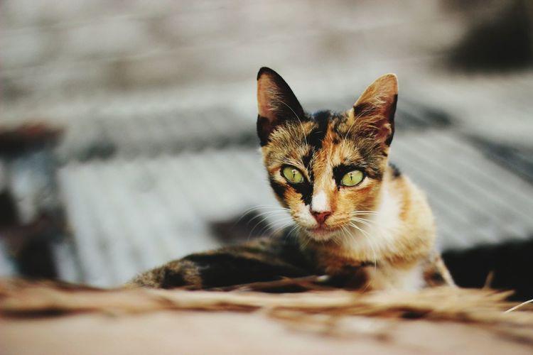 Portrait of stray cat