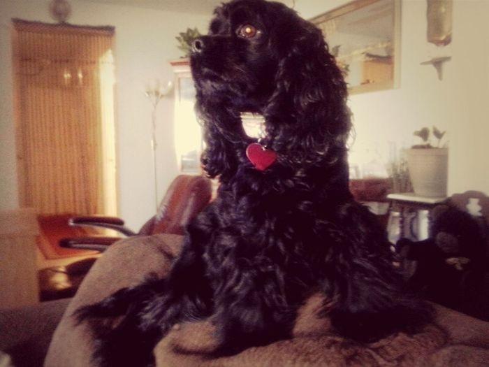 Prettiest Dog Alive