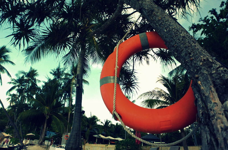 Life Saving Life Saving Equipment Life Saving Ring Low Angle View Palm Tree Palm Trees Rescue Rescue Equipment Saving Wheel