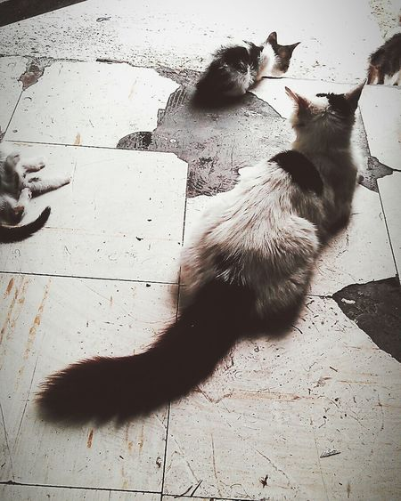 Friends cats... Cats Cats Of EyeEm Pets Catslover