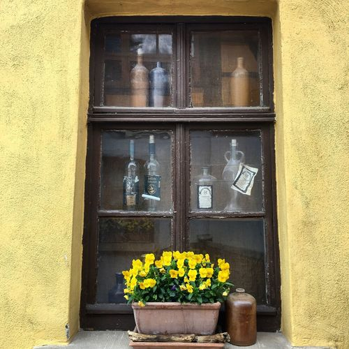 Window with some old bottles and a pot flower Building Exterior Flower Window Architecture Yellow Residential Building Built Structure Plant House No People Outdoors Day Nature Bottles Old Style