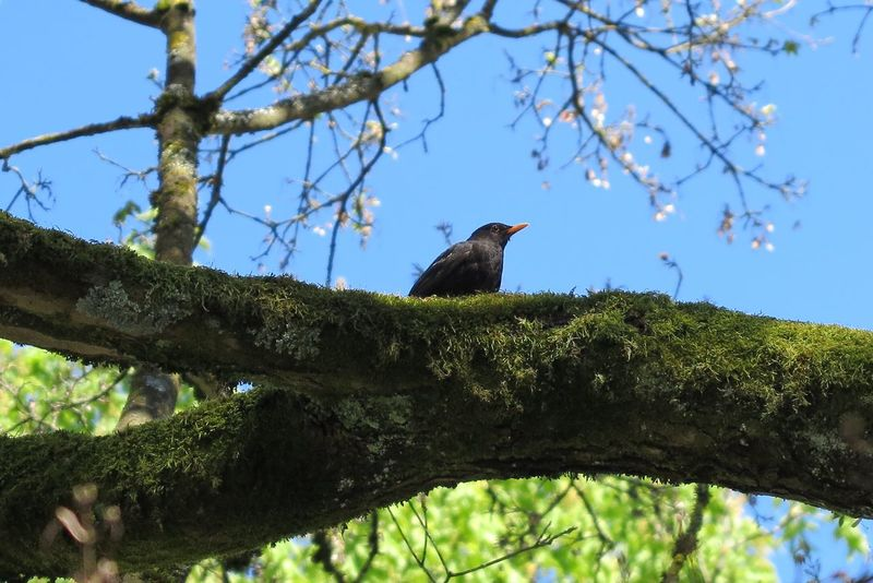 Black Birds On A Tree Bird Photography Trees And Nature Naturelover