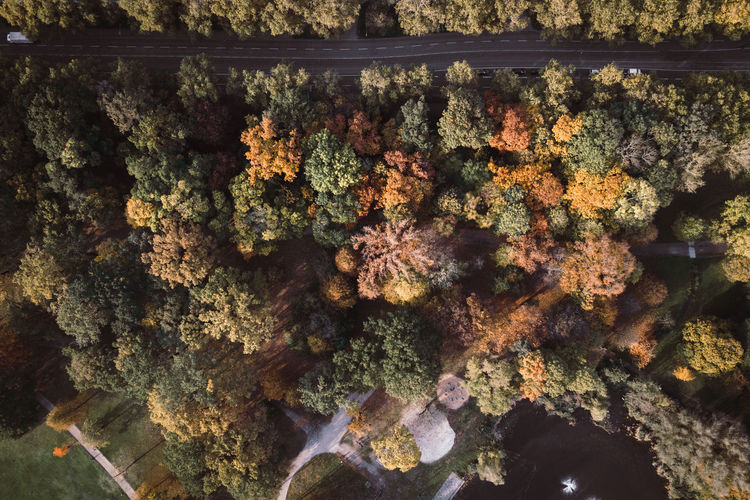 Drone  Beauty In Nature Close-up Day Dronephotography Growth Nature No People Outdoors Water Shades Of Winter