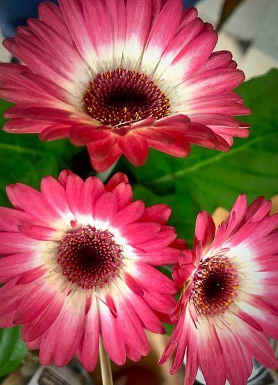 Flowers looking