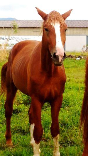 Natural Beauty Nature Photography Animal Animal Photography Horse Horse Photography  Cheese! Asus Zenfone Photography Asuszenfone2photography Smartphonephotography