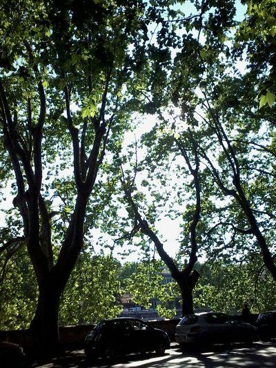 Showcase May EyeEm Best Shots Trees Italia Roma Italy Rome Alberi Platani EyeEm Nature LoverNature The Great Outdoors - 2016 EyeEm Awards