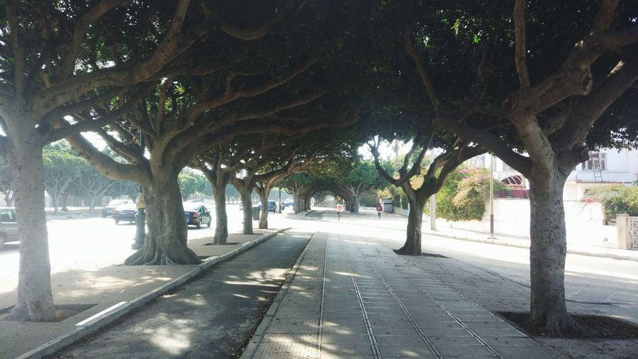 View of trees in park