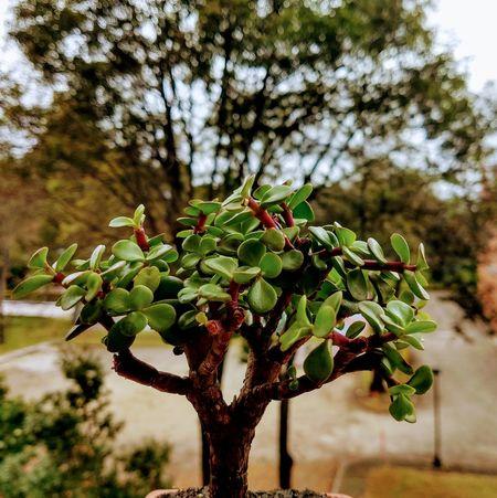 Bonsai Tree Leaf Close-up Plant Green Color