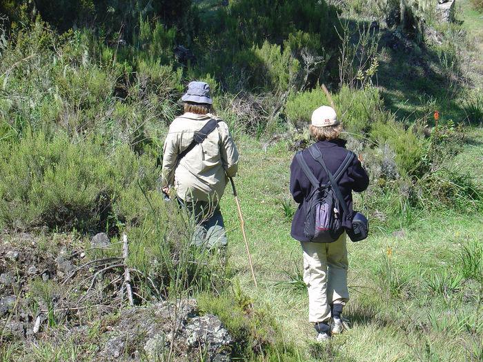 Rear View Of Two People Walking On Green Landscape