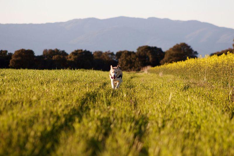 Dog Running On Field Against Sky