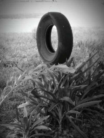 Field Grass No People Outdoors Day Nature Close-up Rural Scene Tireswing Peace Tranquility EyeEmNewHere