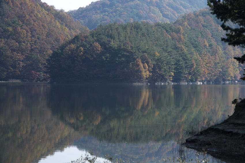 autumn landscape of Busodamak, a beautiful lake located in Okcheon, Chungbuk, South Korea Autumn Autumn Colors Busodamak Fall Beauty Morning Light Okcheon Beauty In Nature Day Forest Lake Lake In Autumn Lake In The Morning Landscape Mountain Nature No People Outdoors Reflection Scenics Sky Tranquil Scene Tranquility Tree Water Waterfront