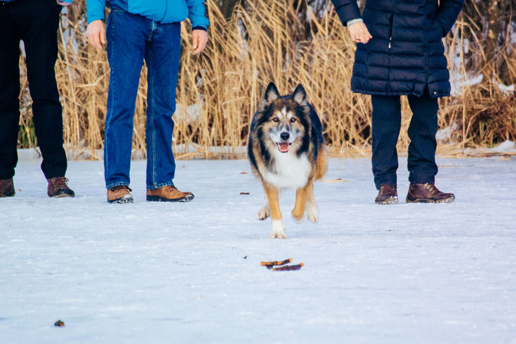 Low section of people with dog on snow