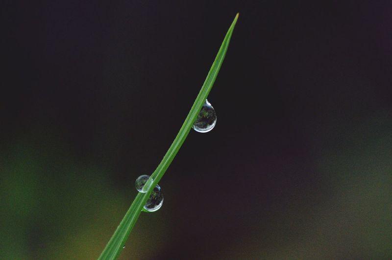 Water Dew Black