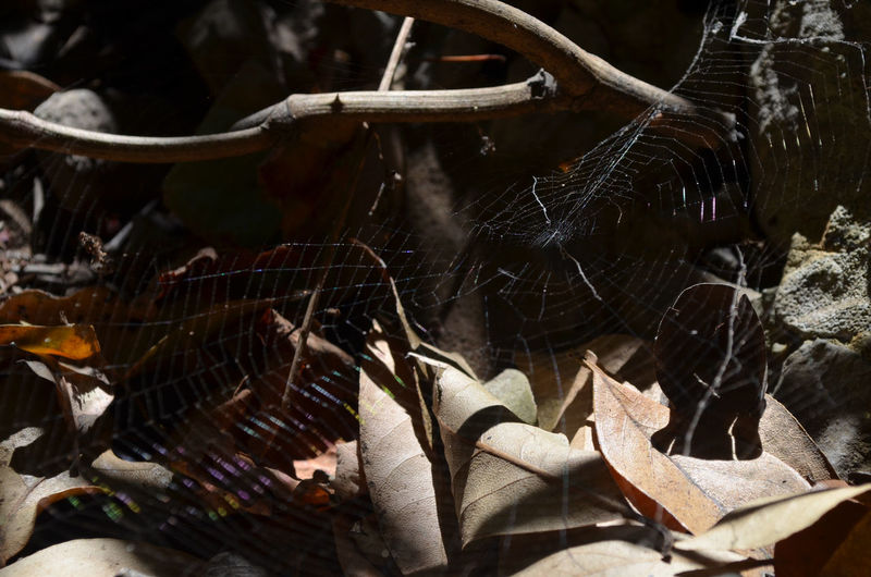 Close-up of spider web on dry leaves