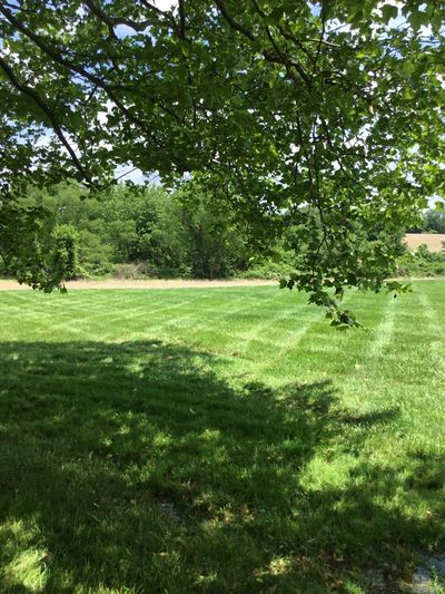 Trees Tree Grass Green Color Nature Growth Tranquility Field Beauty In Nature No People Day Outdoors Landscape Pennsylvania Beauty Chester County Pennsylvania