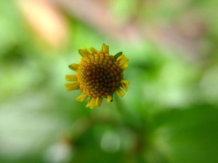 Flower Petal Nature Plant Day Yellow Macro Camera Follow Followme Like Planet Earth First Eyeem Photo EyeEm Fotografia Mexico Likes Beauty Earth Photography Color Fragility Fallow Beautiful Nature