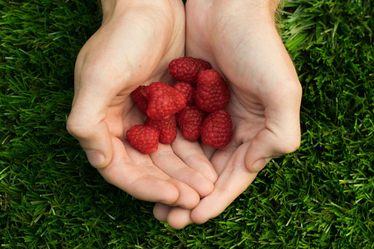 Raspberries Child Childhood Close-up Day Directly Above Food Food And Drink Freshness Fruit Grass Green Color Healthy Eating High Angle View Holding Human Body Part Human Hand Nature One Person People Raspberry Real People Red Strawberry Women