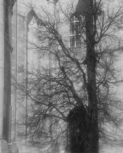 Вход в церковь. архитектура деревья Церковь Tree Bare Tree Branch Winter Close-up Architecture Building Exterior