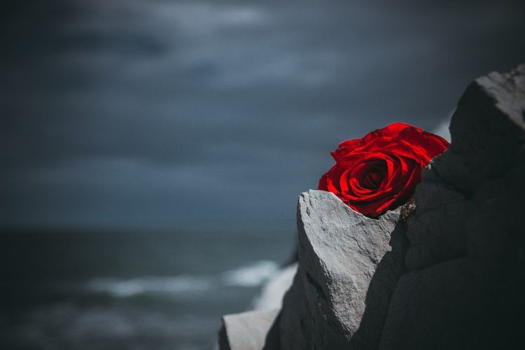 Sea Red Flower Rose - Flower Close-up Sky Tombstone Place Of Burial Death Cross War Memorial Memorial Tomb Crucifix Gravestone Isolated Color The End Horizon Over Water Cemetery Graveyard Mourning Grave Shore
