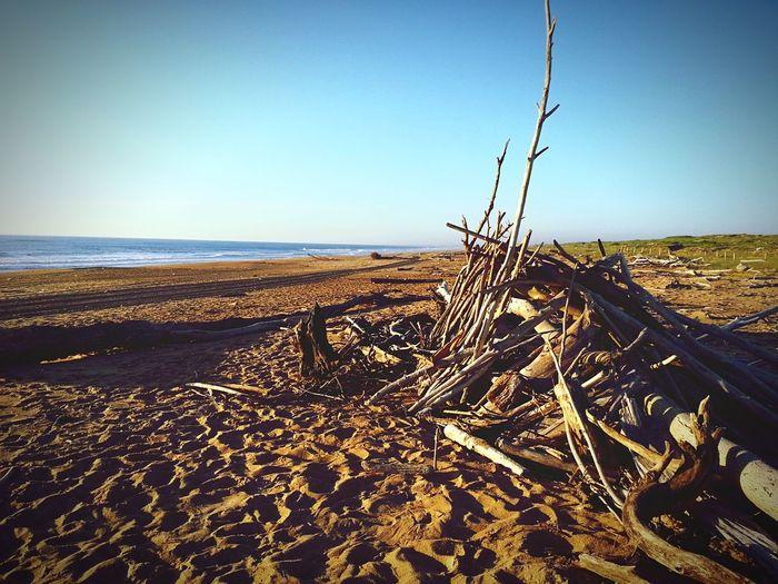 Beach Wood Ocean Cabin