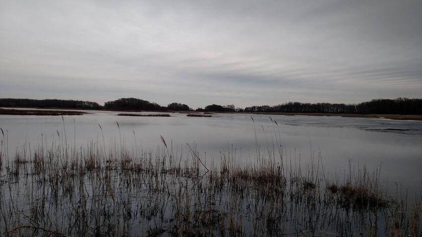 Marshland Water Tranquility Outdoors Nature Beauty In Nature Day Sky No People Scenics Marsh