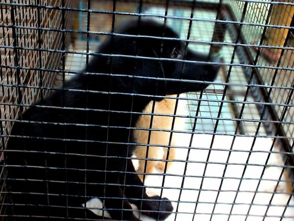 Puppies Puppies Puppy Dog Face Puppylife Puppy Dog PuppyInTheWindow Puppydogeyes Animals In Captivity Trapped One Animal Pets Close-up Security Bar