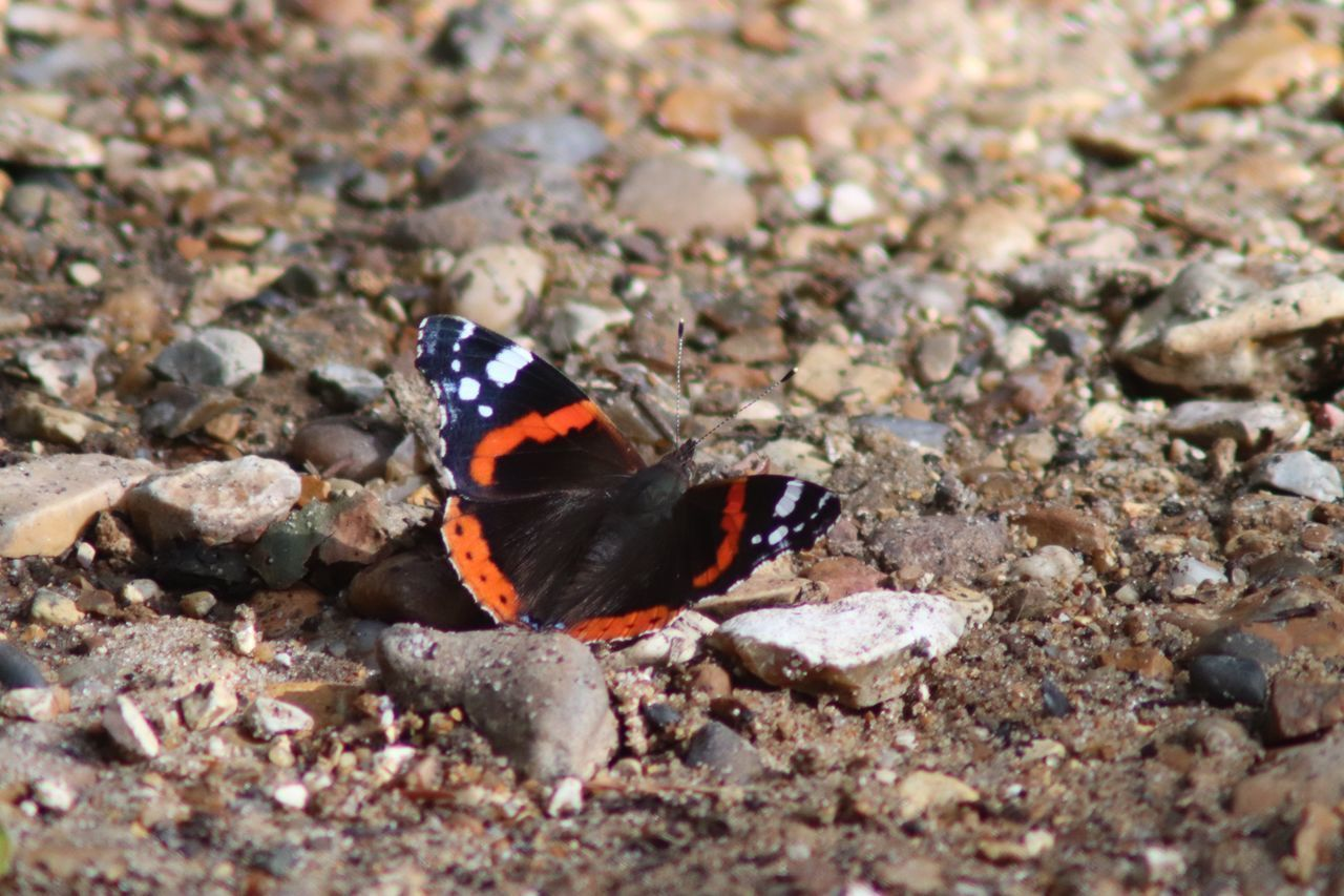 animal themes, animal wildlife, animal, animals in the wild, one animal, insect, day, nature, invertebrate, no people, selective focus, rock, solid, close-up, outdoors, rock - object, zoology, beauty in nature, stone - object, land, butterfly - insect