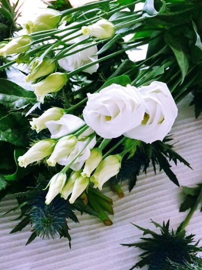 Flower Petal White Color Flower Head Fragility Rose - Flower Leaf Nature Plant Beauty In Nature No People Freshness Bouquet
