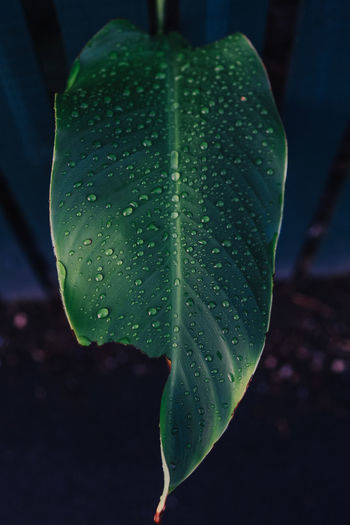 leaf Beauty In Nature Close-up Day Dew Drop Flower Focus On Foreground Fragility Freshness Green Color Growth Leaf Nature No People Outdoors Plant Plant Part Purity Rain RainDrop Vulnerability  Water Wet
