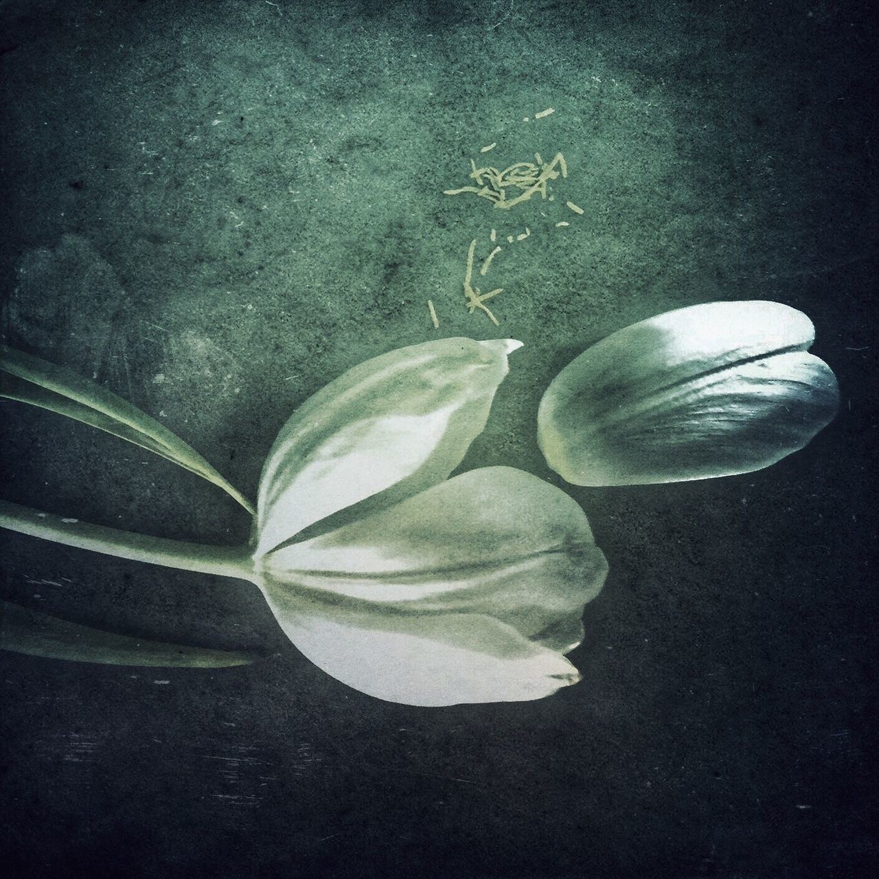 flower, no people, close-up, studio shot, leaf, beauty in nature, fragility, nature, indoors, freshness, flower head, day