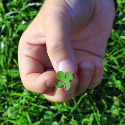 Luck Lucky Luck Naturephotography Beautifulnature Beautyofnature Naturebeauty Moment Capture Composition Lucky Clover Human Hand Low Section Nail Polish Child Fingernail Holding Leaf Summer Close-up Grass