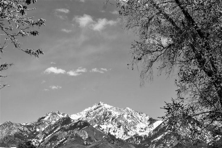 The Peaks Black
