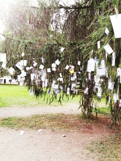 Oslo Celebration King Queen Norway Cards Paper On Paper Tree