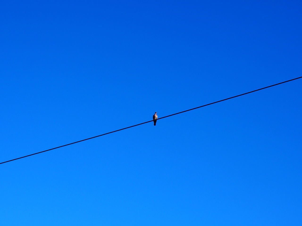 blue, copy space, clear sky, cable, low angle view, animals in the wild, day, one animal, outdoors, one person, real people, animal themes, bird, nature, full length, perching, people