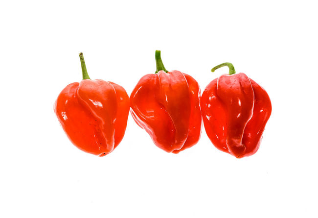Fresh ripe Caribbean Red Habanero hot chili pepper with green stem. Isolated on white. Capsicum Annuum Caribbean Red Habanero Chili Pepper Green Color Hot Hot Pepper Red Capsicum Capsicum Chinense Capsicum Pepper Chili  Close-up Food Fresh Freshness Fruit Habanero Habanero Pepper Homegrown Hot Peppers Orange Color Organic Pepper Vegetables Yellow