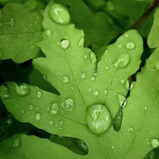 Beauty In Nature Close-up Day Dew Drop Freshness Green Color Growth Leaf Leaf Vein Leaves Nature No People Outdoors Plant Plant Part Purity Rain RainDrop Rainy Season Water Wet