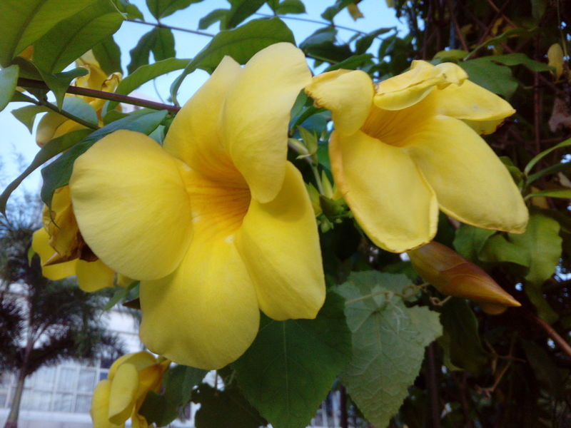 Growth Yellow Tree Nature Beauty In Nature Flower Outdoors Close-up Leaf Freshness Fruit Plant No People Day Fragility Petal Flower Head Blooming