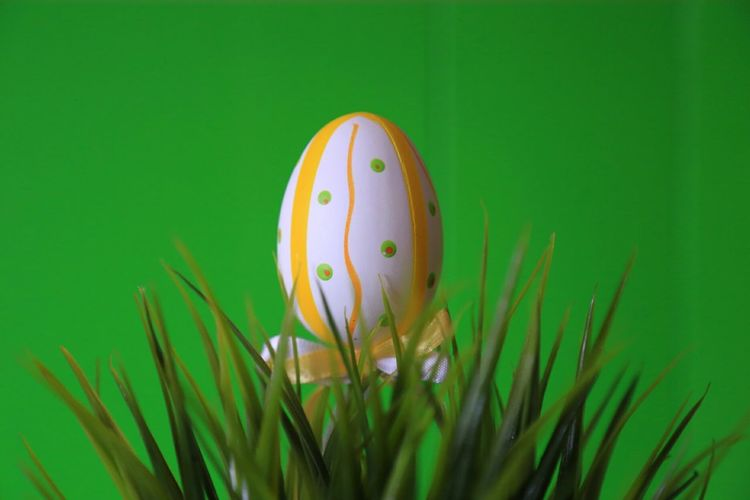Isolated Easter Deco series The Purist (no Edit, No Filter) Raw Raw Photography Noedit Raw Image Nofilter Stock Photography Stock Image Wielkanoc Easter Green Color Easter Egg Springtime Grass Springhassprung Green Background Stories From The City Easter Decoration Selective FocusColored Background Close-up Easter Egg Celebration Egg Grass