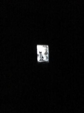 Window Dark Indoors  Darkroom Darkness Cat