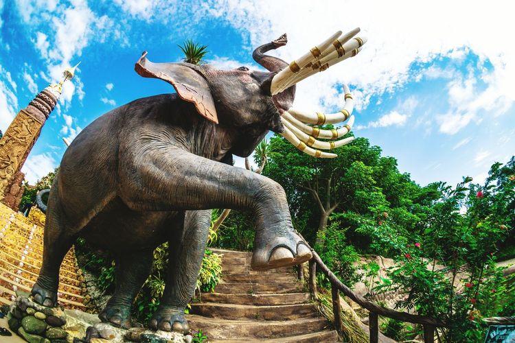 สัตว์ สัตว์เลี้ยง ช้าง ช้างไทย วัฒนธรรม ประเพณี รูปปั้น อารมณ์ ศิลปะ หุ่นปูน