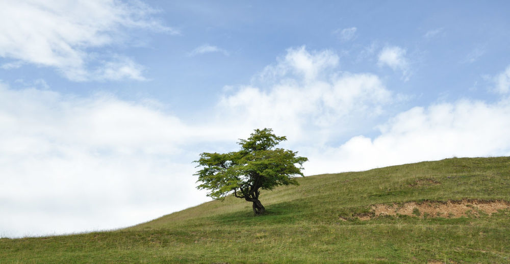 Almost Windows Wallpaper Lonely Tree Hill Romania Ranca Sky And Clouds Clean Landscape Simple Photography Beauty Beautiful Nature Minimalism EyeEm Nature Lover Landscapes With WhiteWall