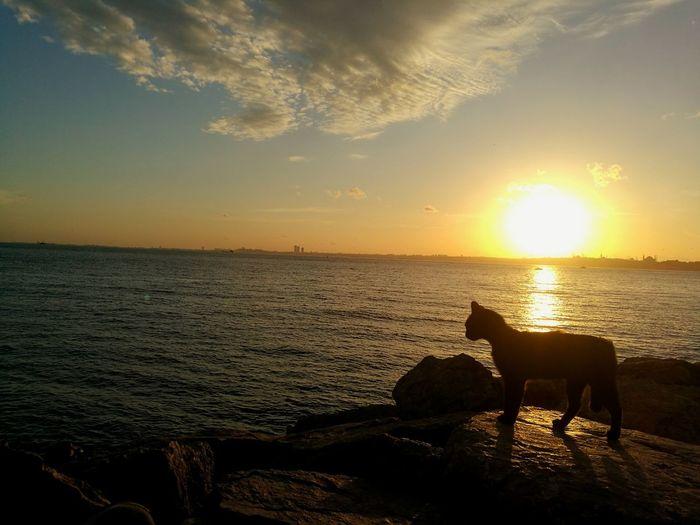 EyeEm Selects EyeEm Best Shots EyeEm Nature Lover EyeEnOnInstagram Cat Sunset Sea Sunset Water Pets Silhouette Sun Sky Animal Themes Cloud - Sky Romantic Sky Moody Sky Seascape Horizon Over Water Coast