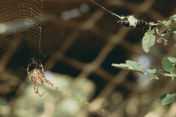 Spider Web Focus On Foreground Insect Spider Close-up Nature Animal Themes No People Animals In The Wild Outdoors One Animal Day Beauty In Nature Nature Photography Life Life Cycle Bug The Week On EyeEm