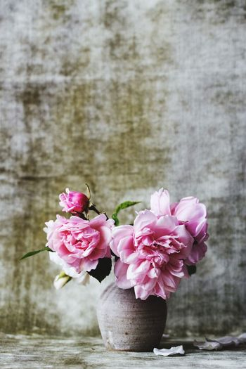 Close-up of pink rose flowers in vase
