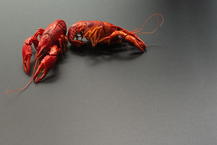 Crayfish red,