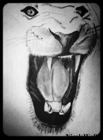 Just a quick one. Sketch Drawing Lion Hobby