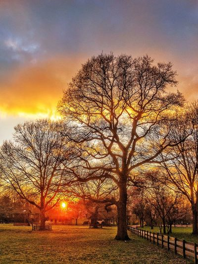 Trees against dramatic sky during sunset