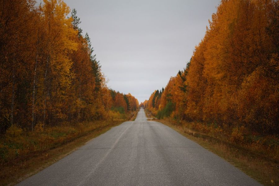 Autumn Autumn Colors Finland Lapland Autumn Beauty In Nature Change Day Diminishing Perspective Leaf Nature No People Orange Color Outdoors Road Scenics Sky The Way Forward Tranquil Scene Tree Lost In The Landscape Go Higher The Great Outdoors - 2018 EyeEm Awards