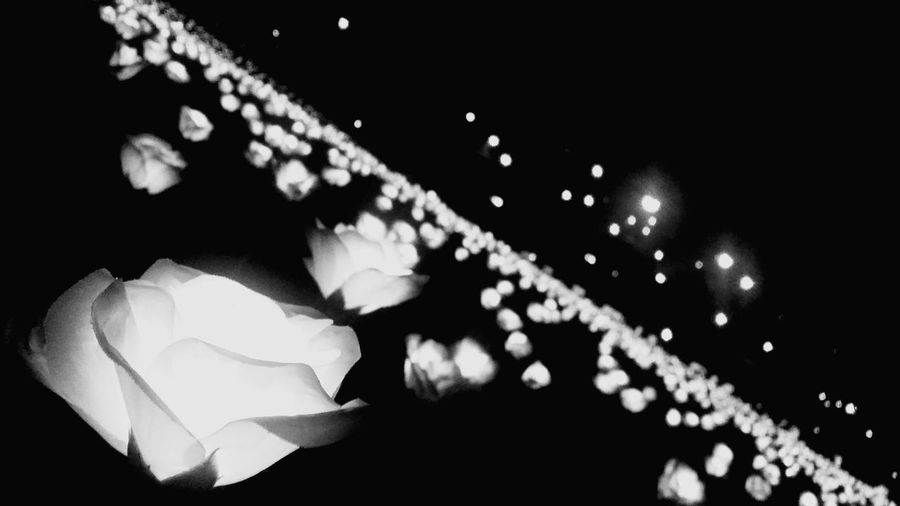 Throwback Light Sensation Night Photography Night Lights White Lighting Flower Black And White Photography Simple And Beautiful